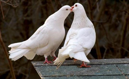Sevgi ve Paylaşım