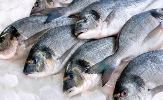 Balık satın alırken