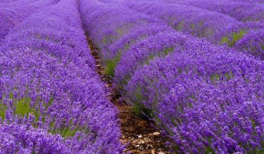 Doğal Parfüm Nasıl Yapılır?