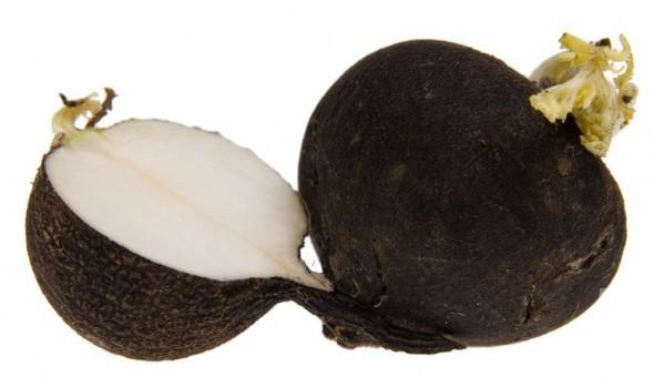 Siyah Turp'un Faydaları