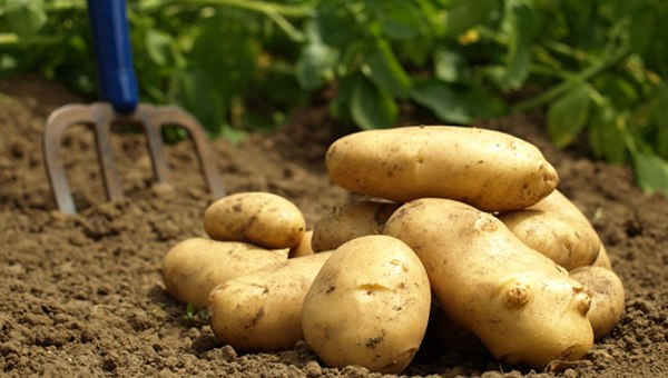 Patatesin Saymakla Bitmeyecek Faydaları
