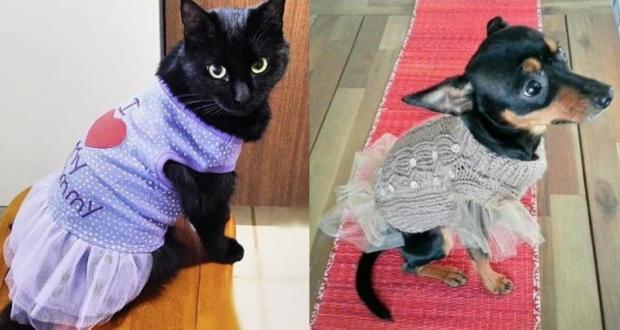 Evcil Hayvanlarında Artık Modası Var