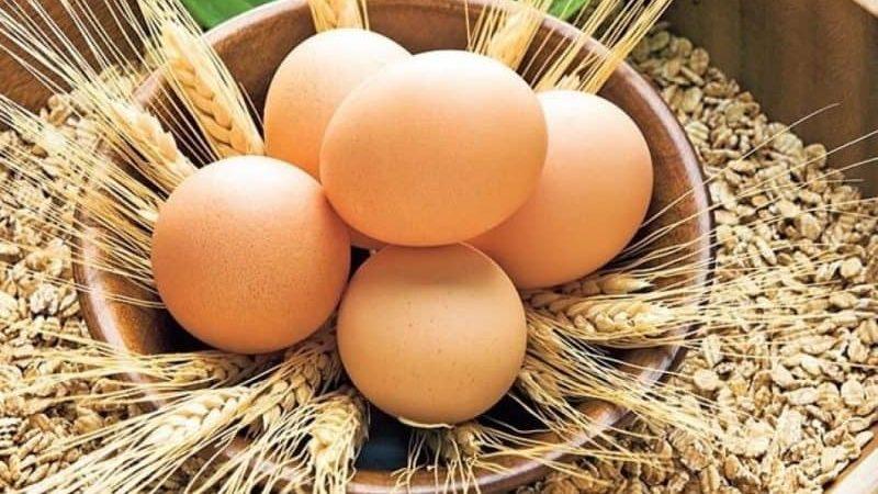 Yumurta Faydalımı Zararlımı? Yumurta'nın Tarihi