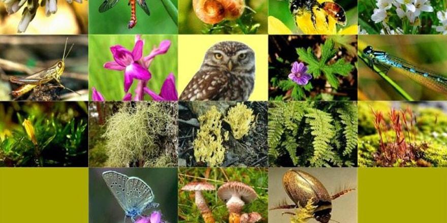 Türkiye'nin çevre ve biyolojik çeşitliliğin korunması
