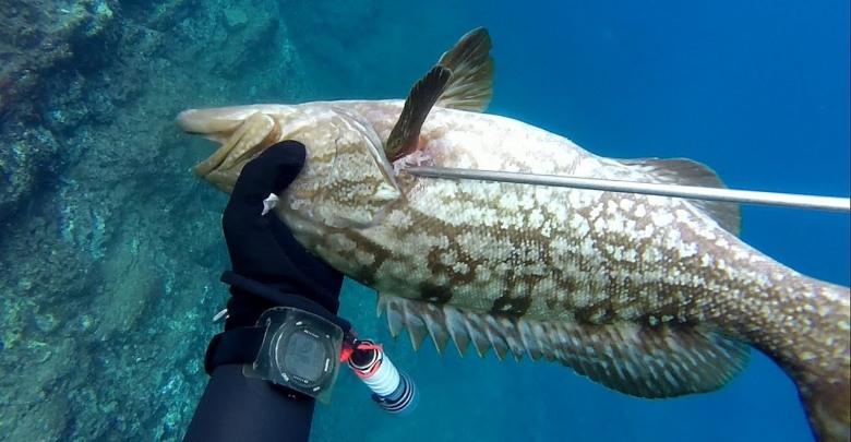 Zıpkınla balık avını yapanların sayısı her geçen yıl artıyor